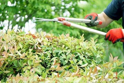 剪定は神戸の植木屋【拓己庭園】へ!~枝の剪定はプロにお任せ~
