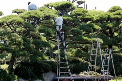 剪定のタイミングは木の種類によって違う