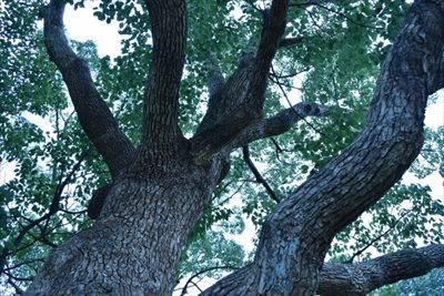 伐採後に木を利用するなら時期も考えよう