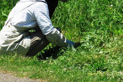 大切な庭木や花を守るためにも必要な除草