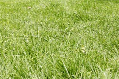 除草を神戸の業者に依頼するなら【拓己庭園】にお任せ!