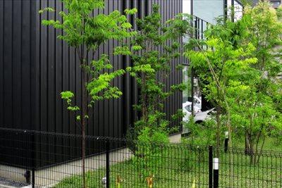 神戸で植栽を行うなら【拓己庭園】へ~植栽のコツは目的に応じた植物選びと植え方~