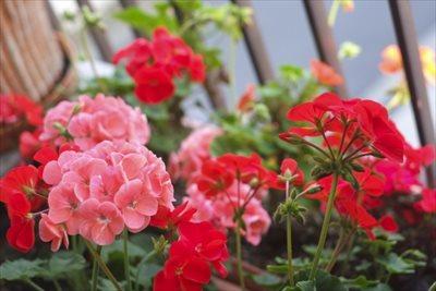 神戸で植栽をお考えなら【拓己庭園】へ~玄関には防虫できる植物を植えよう~